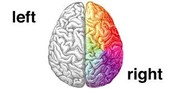 Right And Left Brain Characteristics