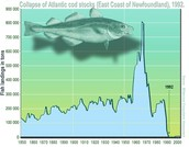 The Economic Value of the Eastern Coast Fish