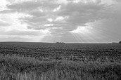 Plenty of free land and fertile soil