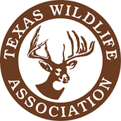 Texas Wildlife