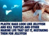Litter...A Major Problem