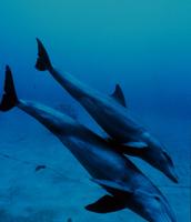 Dolphin Fun Fact