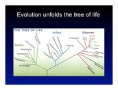 What is Theory of Evolution?