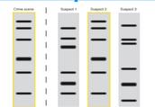 PROS of DNA identification