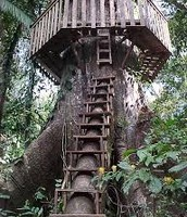 This tree house is like the one David sucied himself