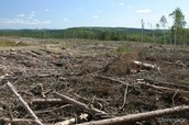 Destruction Of Forest