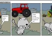 Cat & Machine