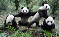 Where do Pandas Live ?