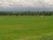 Our very good farming land