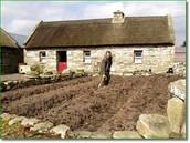 Traditional Irish Farming