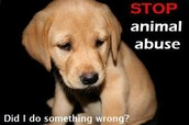 animals don't do wrong they make mistacks