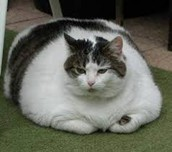 A Very Fat Cat