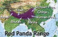 The Red Panda Range