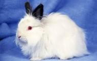 A fury rabbit
