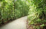A trail on Bukit Timah Nature Reserve