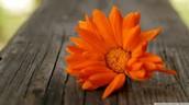 #3 Orange