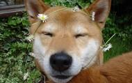 I like flowers.