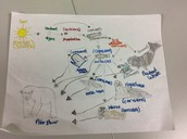 This is the Beluga Whale Food WEB