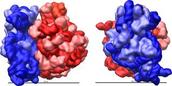 Ribosome