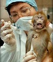 Testing puts extreme stress on animals