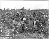 Slaves Working in a Field