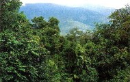 The canopy of the rainforest