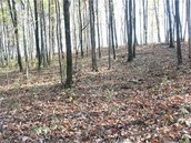One of many Mercersburg woods