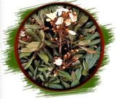 Catuaba Bark Extract (ERYTHROXYLUM CATUABA)