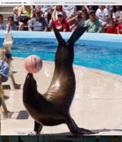 Seal balanceing ball on knose