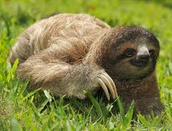 SLOTH SAYS COME TO THE PARTY.