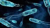 Bacterias tintadas de azul