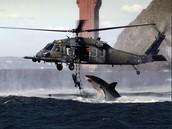 Shark Attack on helicpter