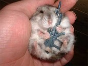 Hamster enlist