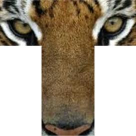 Tamanend Middle School profile pic