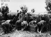 מלחמת העולם הראשונה