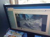 watching a panda cam at the National zoo!