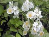 buttifull flowers
