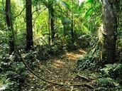 Selva.