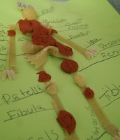Musculoskeletal Project