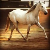 Types of horse gaits