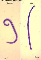 Common Name | Scientific Name