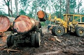 What were some damages in the Daintree?