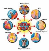Advantages of a stem cell