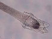 Microscopic View