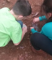 Soil Investigation 12/3
