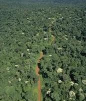 Vista aérea de la selva