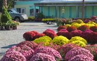 Seasonal Flowers and Plants