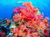 Coral Reef Alive