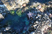 Tide Pool Dos and Don'ts