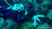 Scuba Diving!!